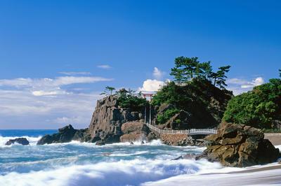太平洋を眺めながら育つ: 桂浜 (高知県)