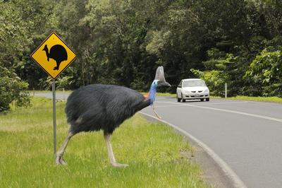 クインズランドの湿潤熱帯地域