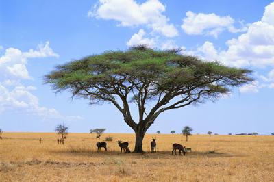 タンザニアの世界遺産