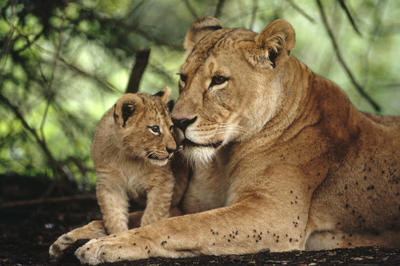 動物の親子