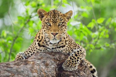 アフロ動物園