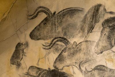 ショーヴェ洞窟壁画 | フランス