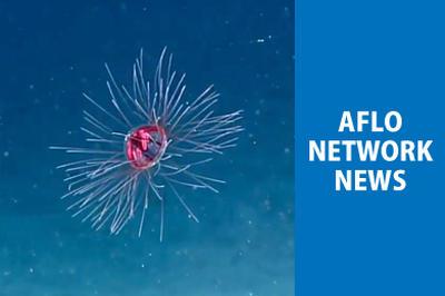 アフロネットワークニュース