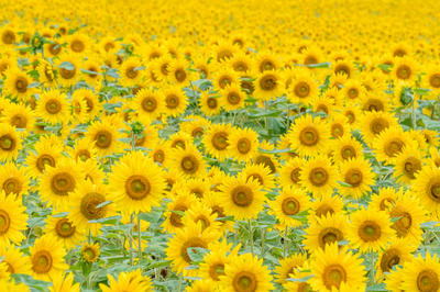 日本の花の絶景