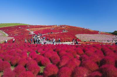 日本の秋の絶景