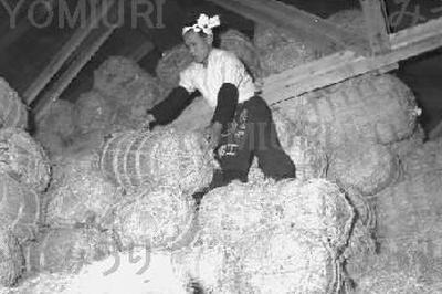 全国的に大豊作(1955年)
