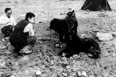 南極でカラフト犬「タロ」と「ジロ」が生存(1959年1月)