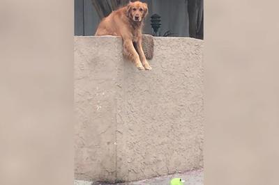 【話題】遊んで欲しくておもちゃ落とす犬