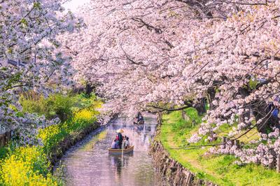 春の自然・風景