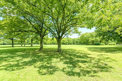 緑あふれる風景