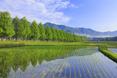 日本の春の絶景