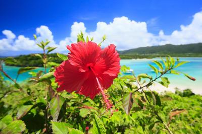 夏の花をまとめて見る