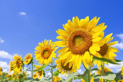 夏特集 - きらめく、夏。 | 写真素材・ストックフォトのアフロ