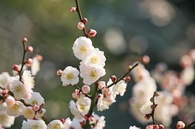 『万葉集』に詠われた花・植物