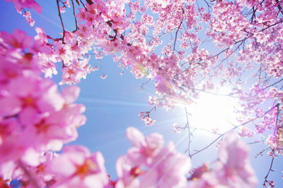 春の動画素材