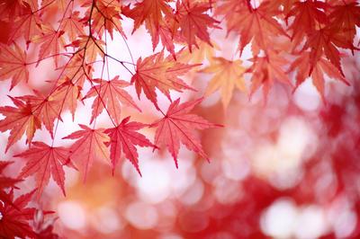 秋の動画素材