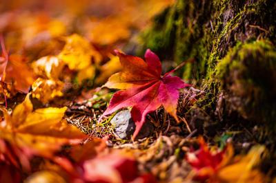 【写真・イラスト】秋特集 - 豊かな秋。