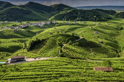 コネリアーノとヴァルドッビアーデネのプロセッコ栽培丘陵群(イタリア)