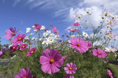 秋の花・植物