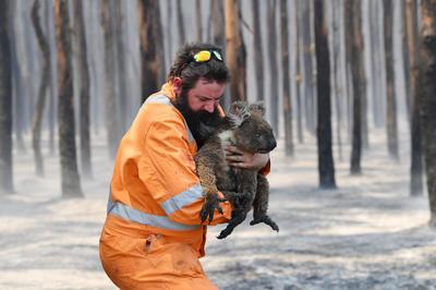 1月 豪東部の森林火災 同国史上最大の被害規模に
