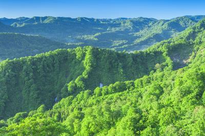 世界自然遺産「白神山地」