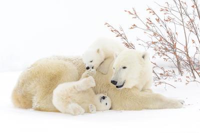 冬の動物たち