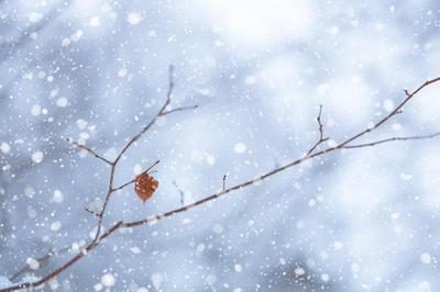 降雪イメージ