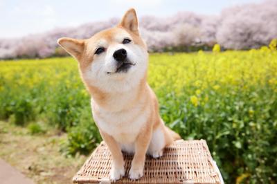 春の動物たち