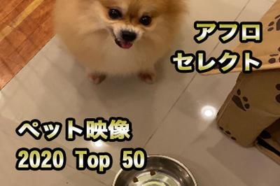 ペット映像 TOP50