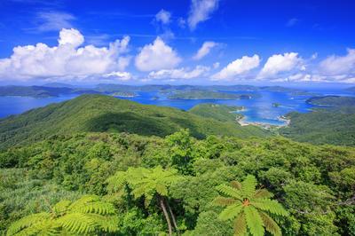 【写真素材】奄美大島、徳之島、沖縄島北部及び西表島
