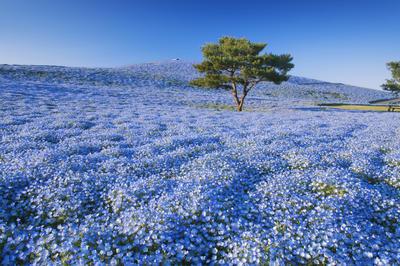 【写真素材】美しい日本の絶景