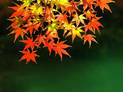 秋を感じる「紅葉イメージ」
