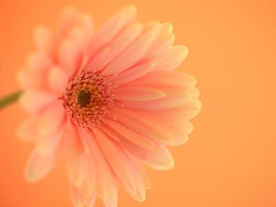感動的!「開花の瞬間」