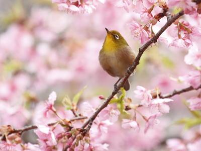 春の陽気で「元気な動物たち」