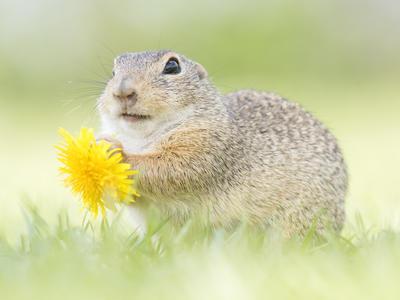 ほのぼの「春の動物たち」