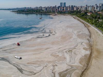 トルコで「海の鼻水」大量発生