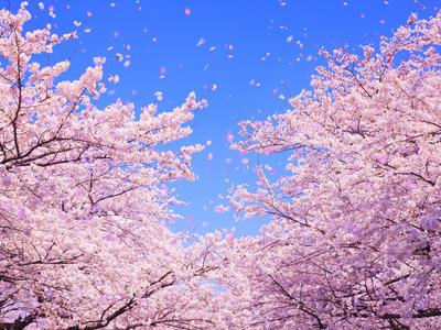 春イメージ