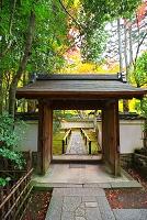 京都府 高桐院