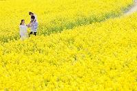 ナノハナ畑の中を歩く日本人家族