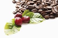 新鮮なコーヒー豆と焙煎したコーヒー豆