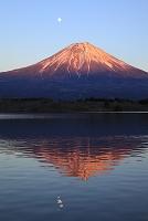 静岡県 田貫湖 富士山と月と逆さ富士