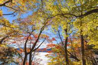 栃木県 日光市 奥日光 中禅寺湖 湖畔の紅葉