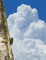 コエゾゼミと入道雲