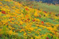 岩手県 初秋の八幡平
