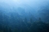 奈良県 春日山原生林
