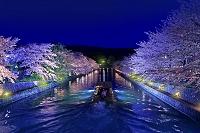 京都府   岡崎疎水 夜景