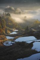 新潟県 秋の棚田棚池