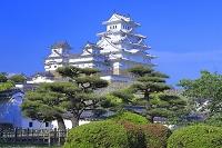 兵庫県 新緑の姫路城