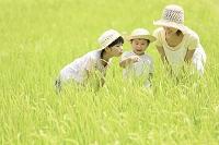 山梨県 田んぼで虫取りする日本人親子