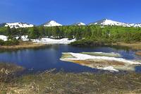 青森県 新緑の睡蓮沼と残雪の八甲田連峰